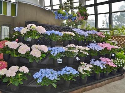 Flower_1056_1